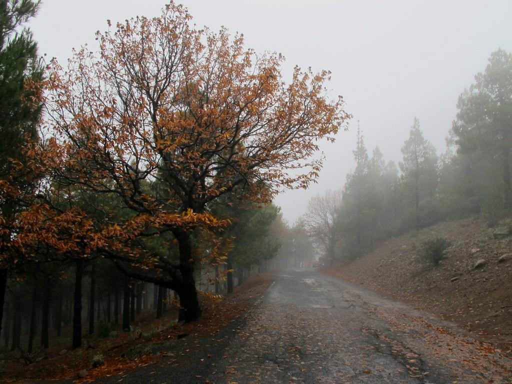 """Fotos """"Un Otoño Lluvioso En Gran Canaria"""" (Noviembre De"""