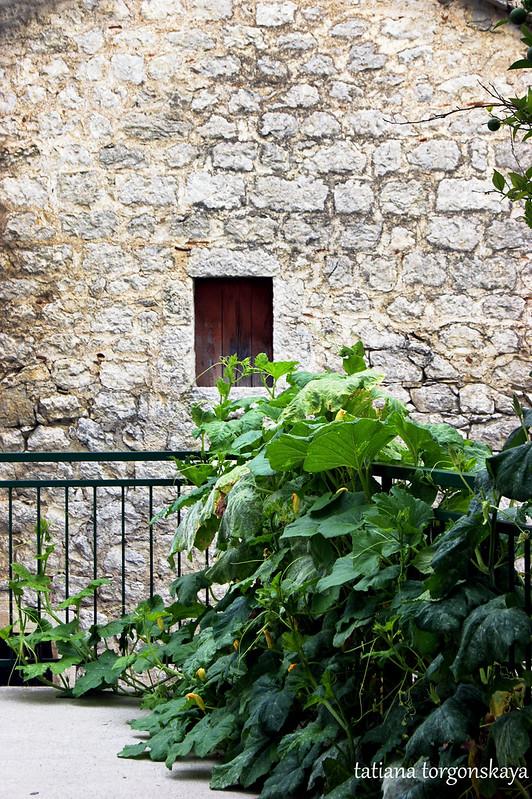 Августовская зелень