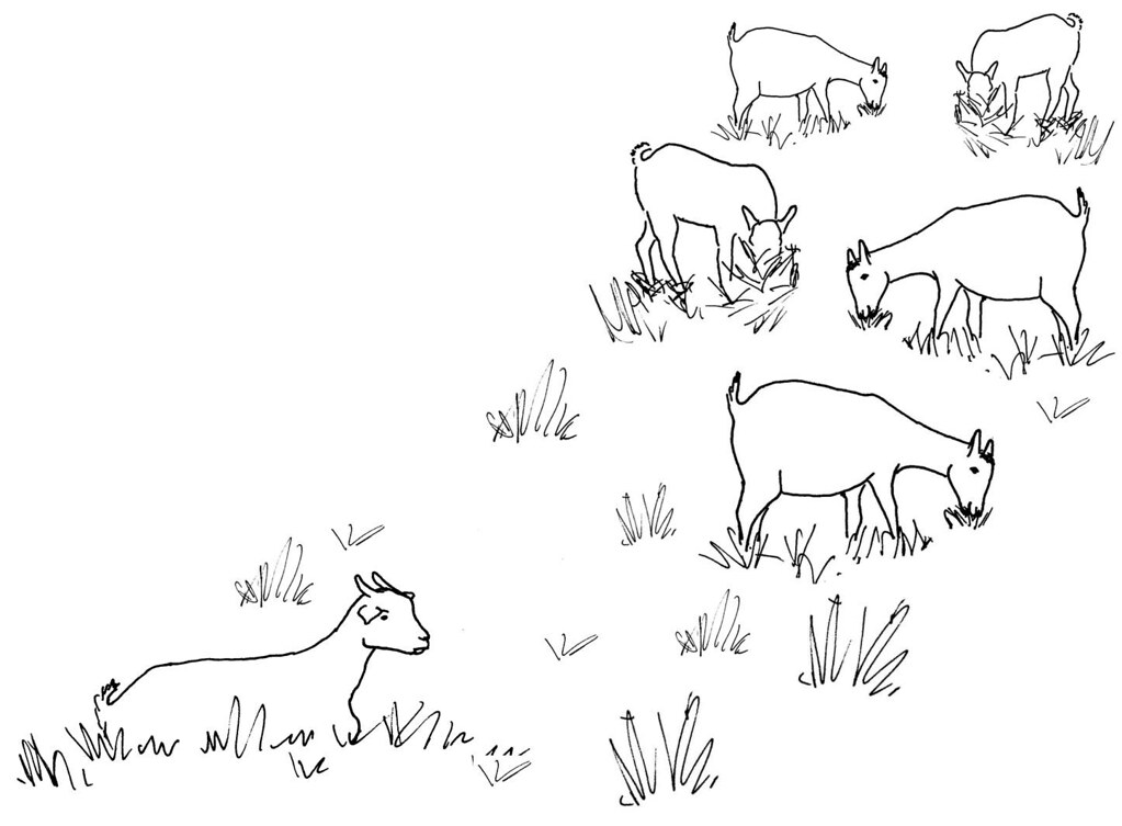 Line Drawing Goat : Line drawing of a sick goat seperated from herd used as