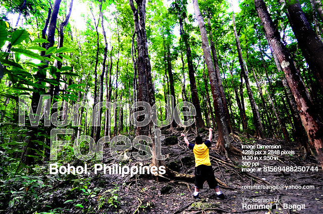Bilar Philippines  city photo : Artificial Forest | Bilar Man made Forest in Bohol Philippines | Bilar ...