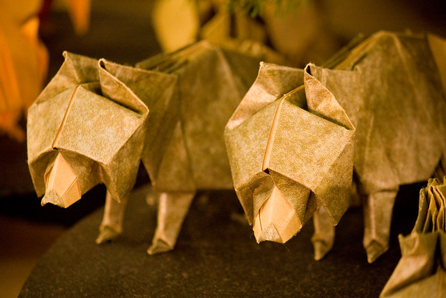 Origami Tree Natural History