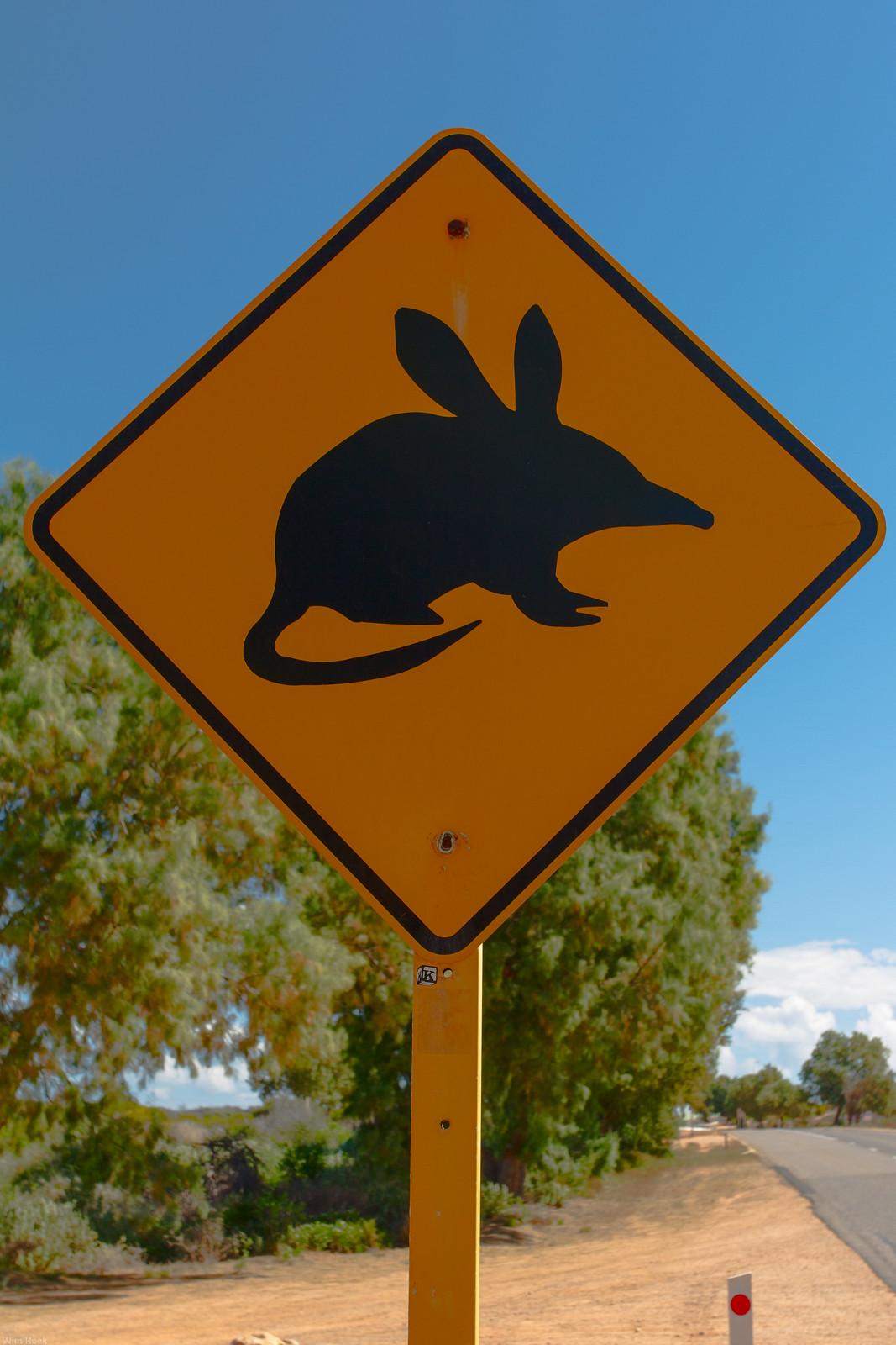 Shark Bay Mouse Shark Bay Mouse   Flickr