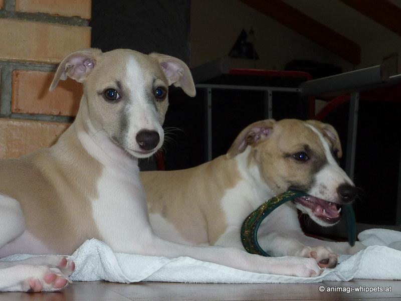 Chinua & Charo