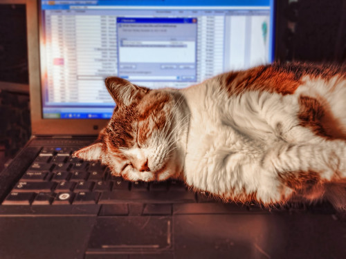 Why I don't get more work done