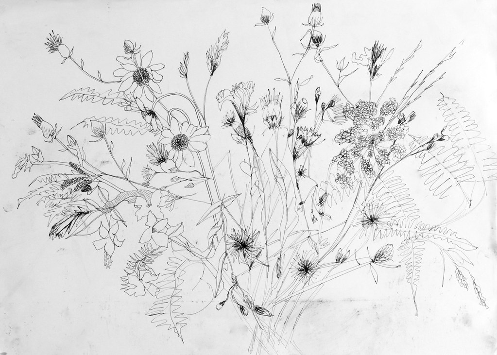 Wildflower Line Drawing : Wildflower sketches black and white pixshark