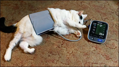 Foto 'How To Take Your Cat's Blood Pressure' by Mark Turnauckas - flickr