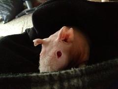 Debbie's Piggie Pouch