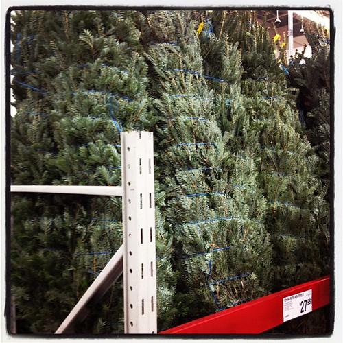 Sams Christmas Trees: Seems A Bit Soon. Will Thy Be D