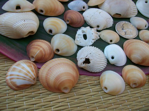 Seashell beads w/naturall drilled holes | by verobeachgal