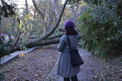 Post-Sandy cleanup | by Brooklyn Botanic Garden