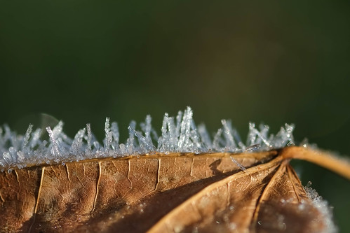 Frosty Leaf | by Nick Harris1