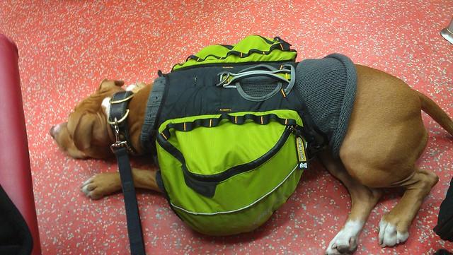 Olive On Metro North Explore Bekathwia 39 S Photos On