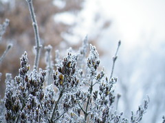 Äste im Winter