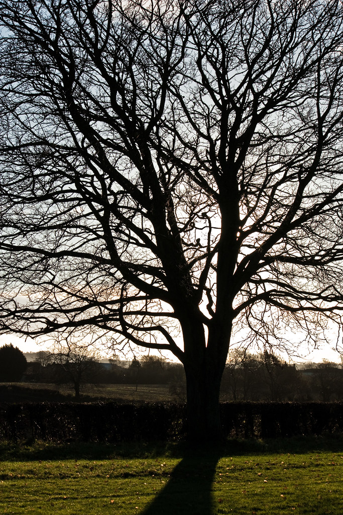 that time of year thou mayst in me behold The commentary is a reprise from the last time i posted this poem, in february of  2008 sonnet 73  that time of year thou mayst in me behold.