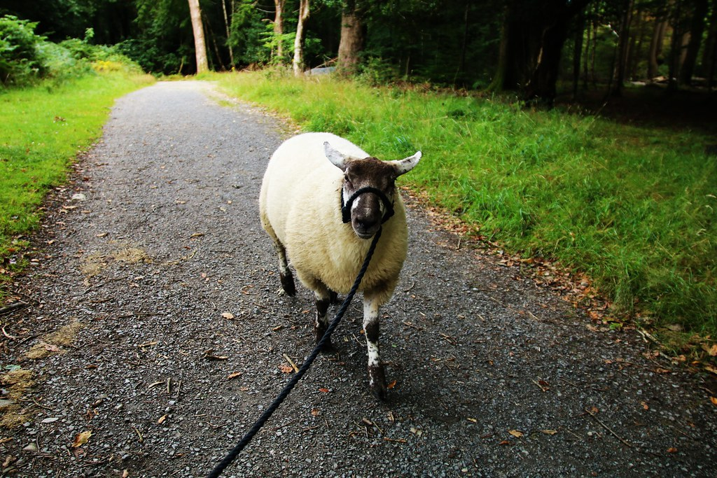 The Dogs of Greenhill Farm: Nobby Goes to the River
