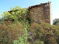 """Piste du castellu : habitation dite """"bergerie du castelu"""""""