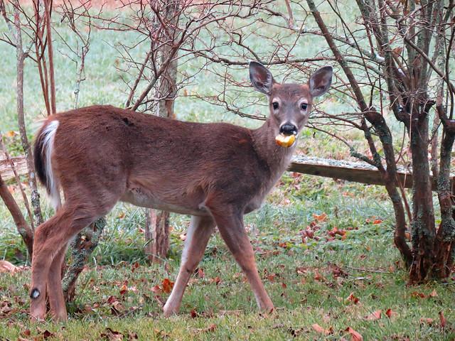 Deer Ridge Homes Kitchener