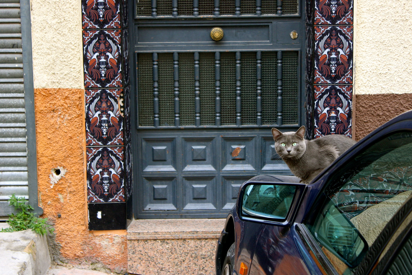 Stray cat with green eyes, Jaén, Spain