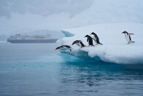 Penguins Diving In, Antarctica | by JC Richardson