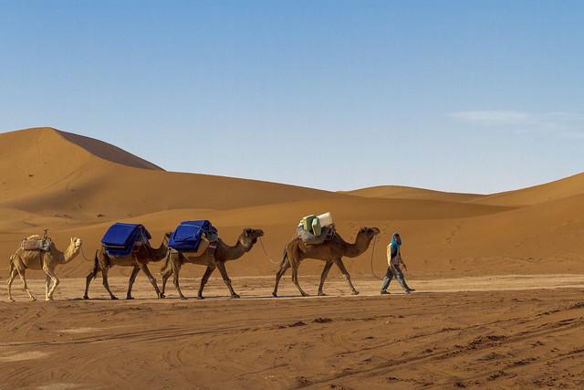 Cool Assale Camel Caravans And Salt Works  Photos  The Number Of Caravans