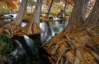 Grand Cypress in Autumn - Hunt, Texas | by Jeff Lynch