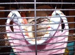 Evie & Smidgeon's Ratty Tatty