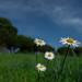 Certi fiori sembrano fendere il cielo...