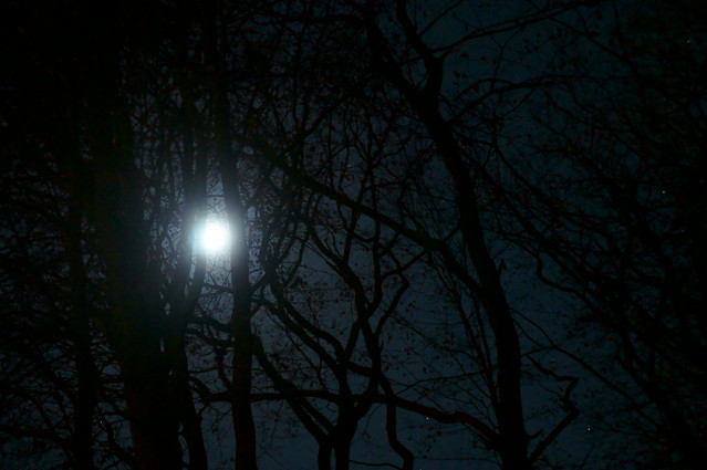 Spooky Forest At Night Flickr Photo Sharing