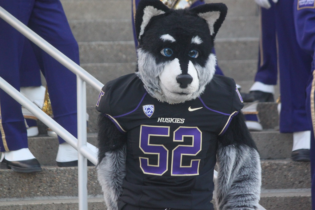 the university of washington mascot harry the husky before flickr