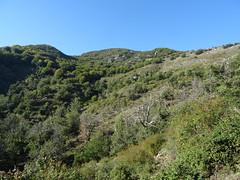 Le versant sous la crête de Punta di l'Ernella