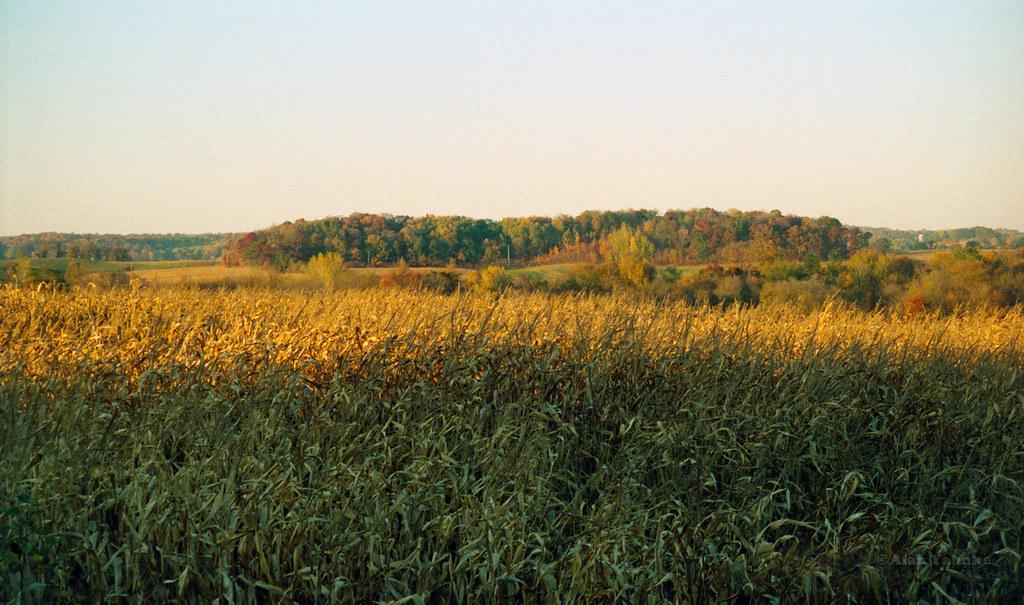 ripe corn alan yahnke pentax iqzoom 160 kodak 800 film flickr rh flickr com