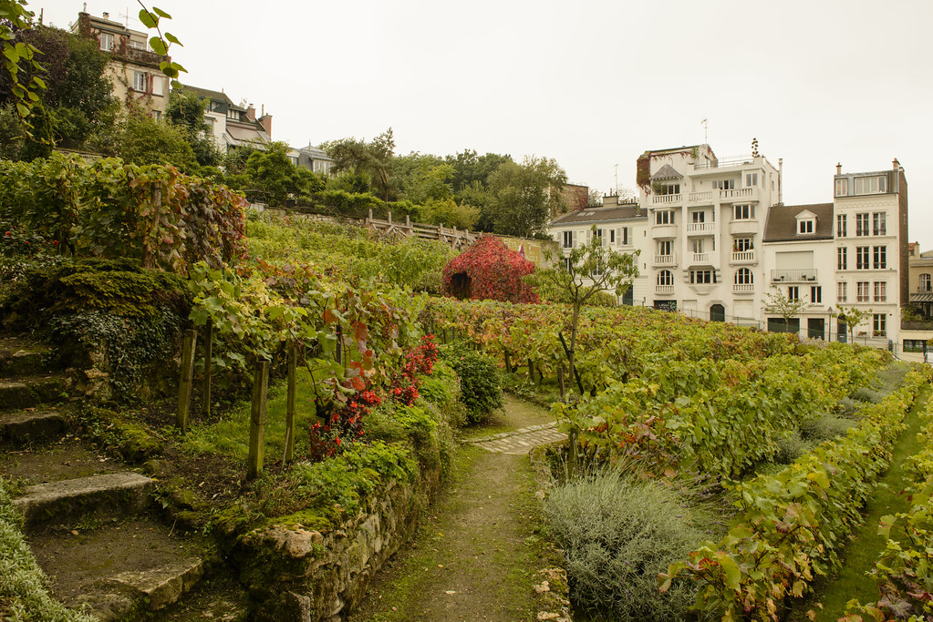 Clos Montmartre 1   The only vineyard in Paris. From www ...