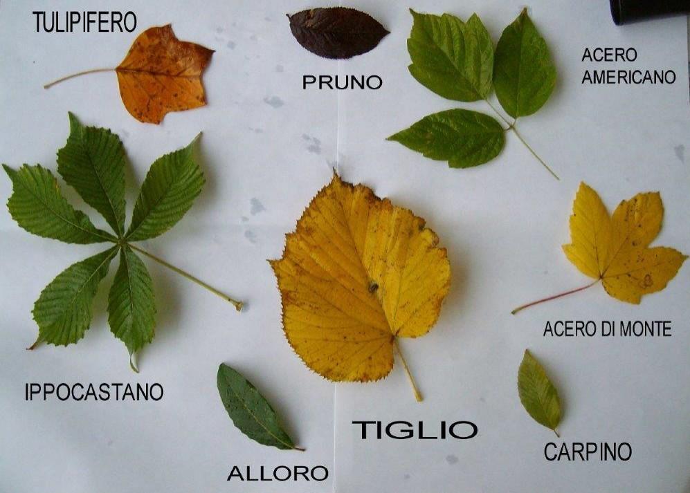 2e foglie giardino nomi jpg naturalmentescienza flickr for Giardino 3d gratis italiano