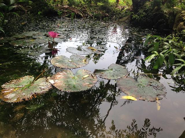林宥辰的父親首先貢獻土地,開闢生態池。攝影:廖靜蕙