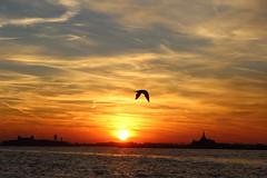 seagull by jmbrooks14