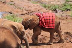 Nairobi-Nationalpark