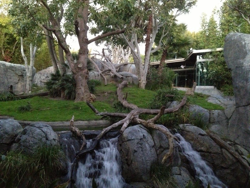 San Diego Zoo Crazy About Cats Review