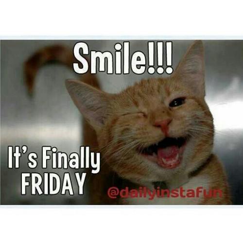 Finally Friday Funny Meme : It s finally friday humor silly hilarious funny fun