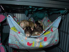 Milo, Keno and Toby's Rat Stash