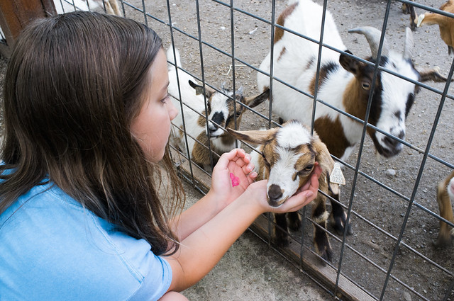 Goat love.