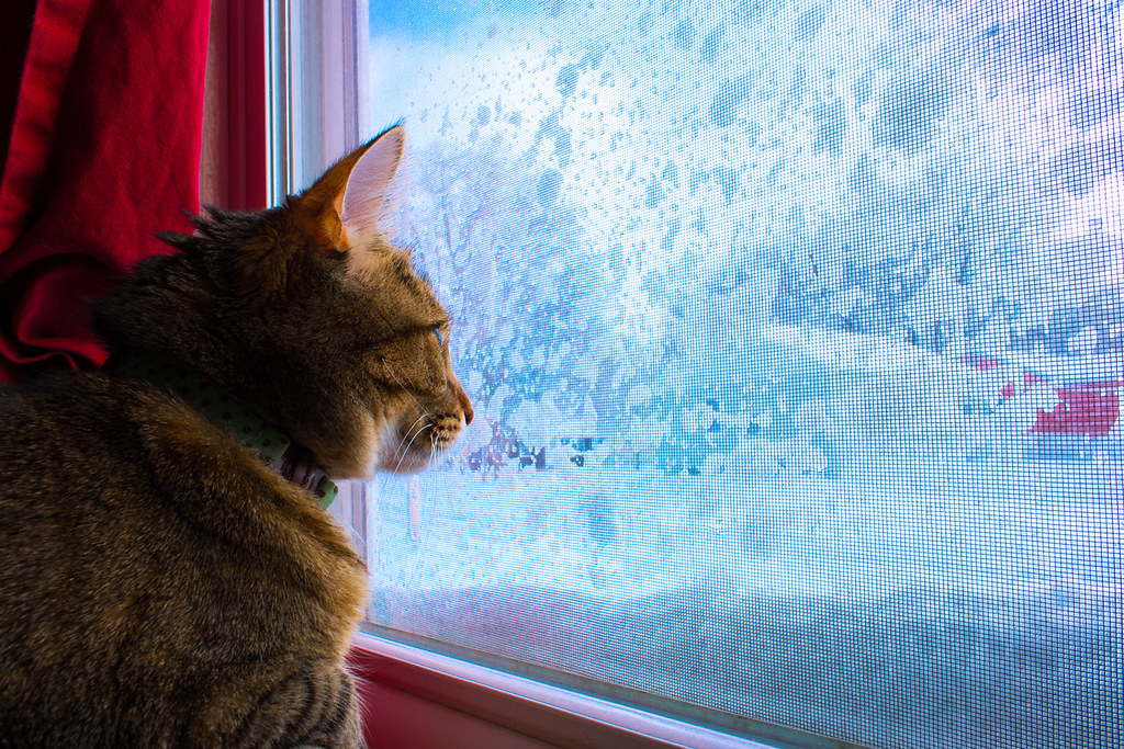 Winter Window Cat | Hazel stays with me for a few days ...