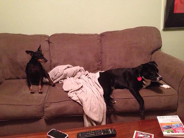Mishka S Dog Owners Divorce