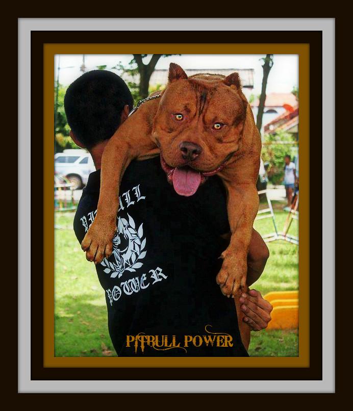 Pitbull Power | Flickr Photo