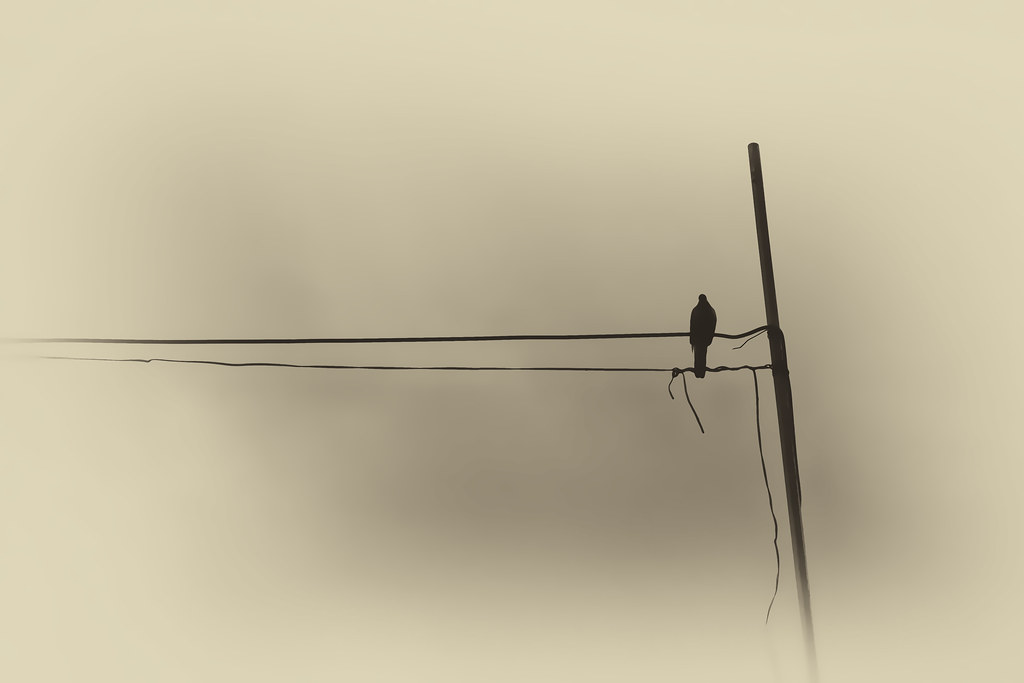 The lone dove by Walid Mahfoudh[Explored]