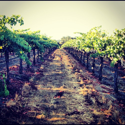 Winter at Jordan Winery vineyards | by jordanwinery.com