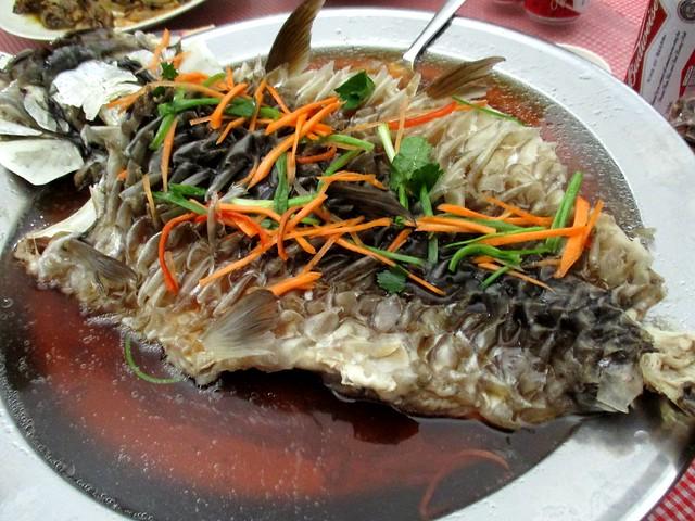 Ikan semah 1