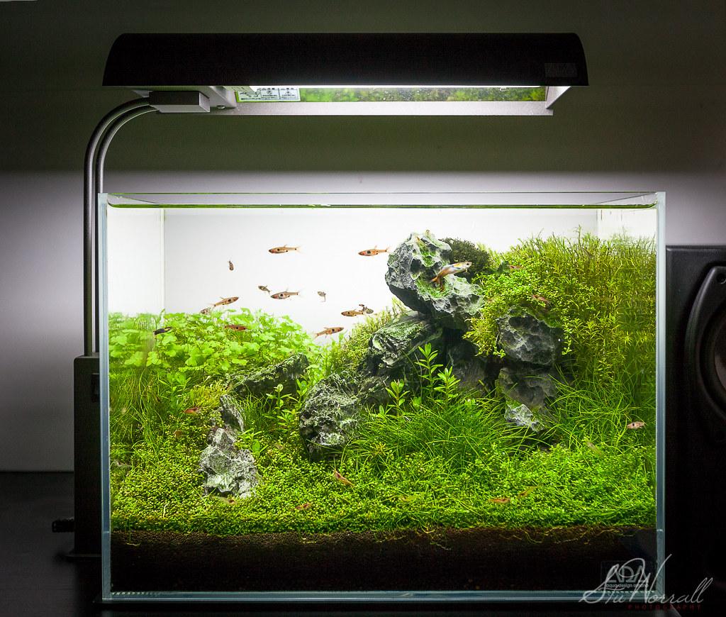 ADA Mini M Nano Tank Front