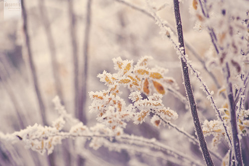 the beautiful side of winter [Explored] | by desomnis