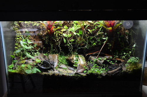29 Gallon Vivarium - Full Tank Shot at 10 Months - 12/27/1 ... 10 Gallon Dart Frog Vivarium