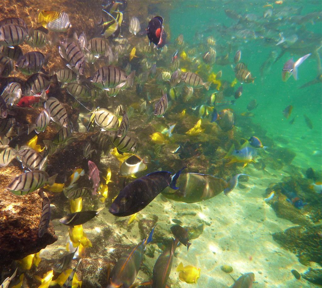 Best Snorkeling In Panama City Beach Fl